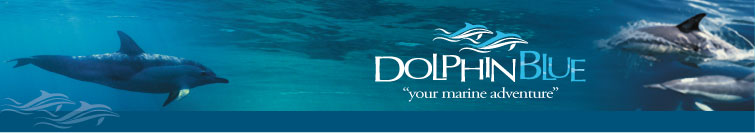 Doplhin Blue - Your Marine Adventure